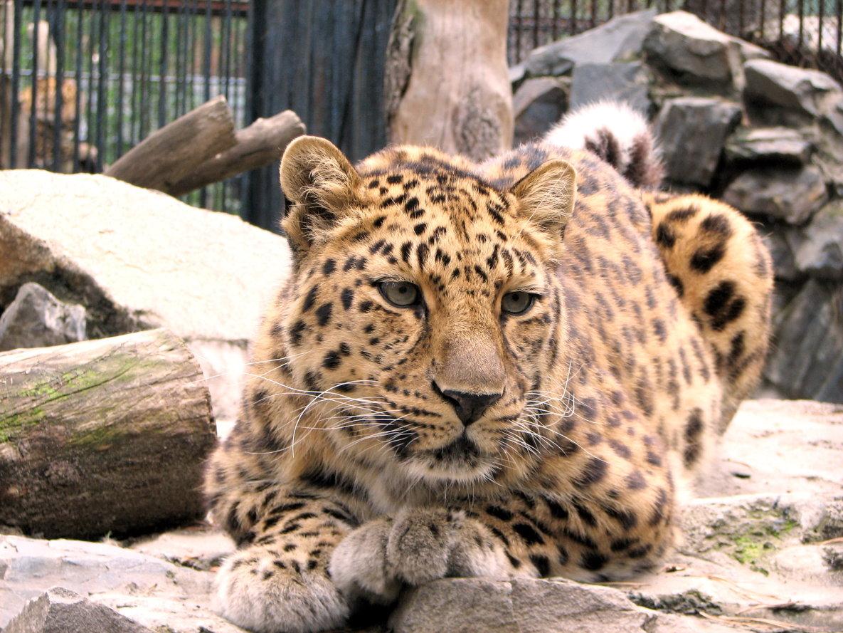 Зоопарк фото животных 6